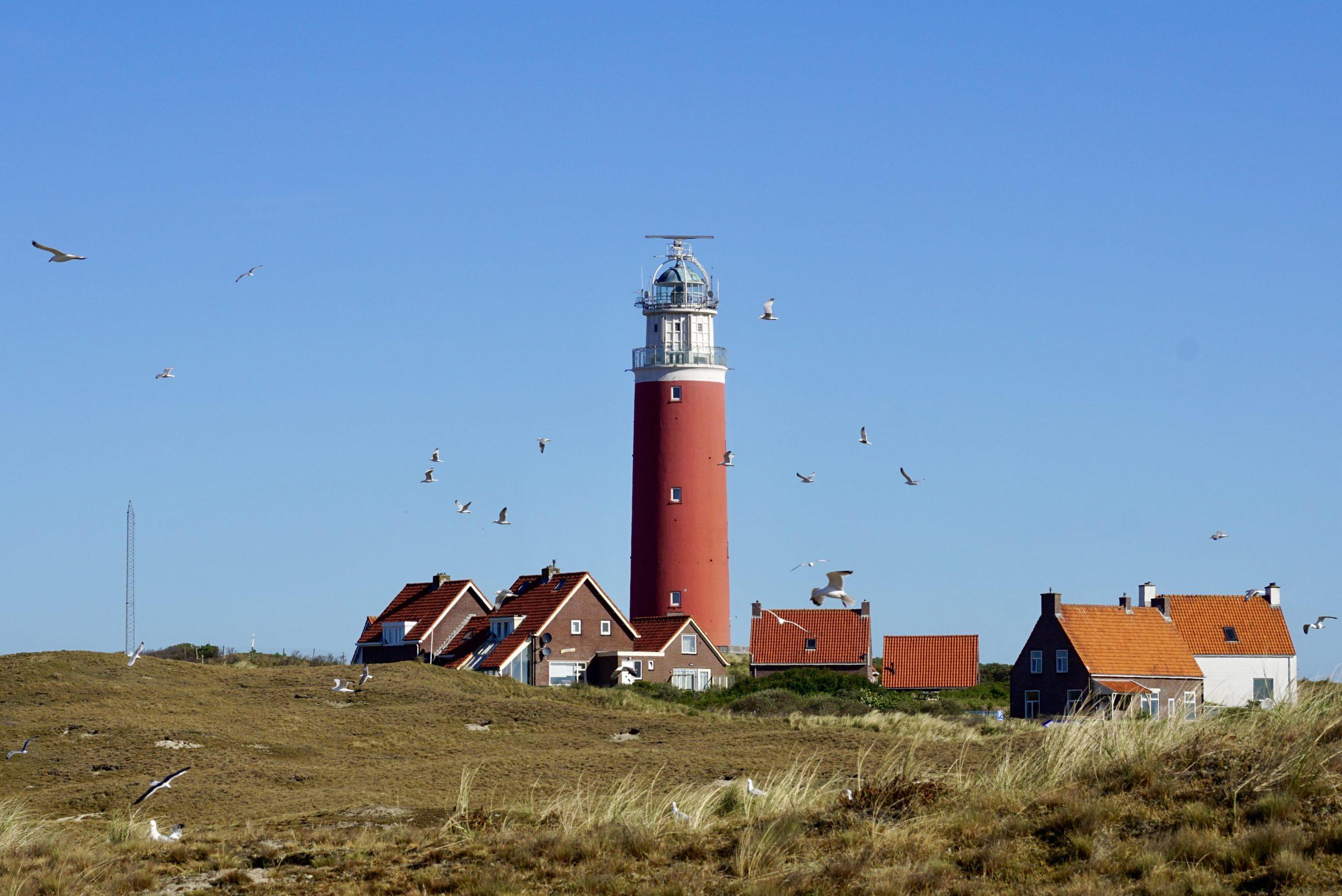 Die niederländische Insel Texel mit Möwen im Vordergrund